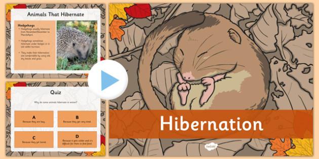 Hibernation PowerPoint - hibernation, powerpoint, animals, winter, sleep