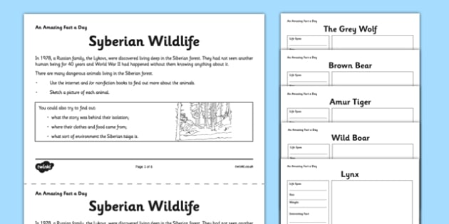 Siberian Wildlife Activity Sheet - siberian, forest, wildlife, fact of the day, activity, worksheet