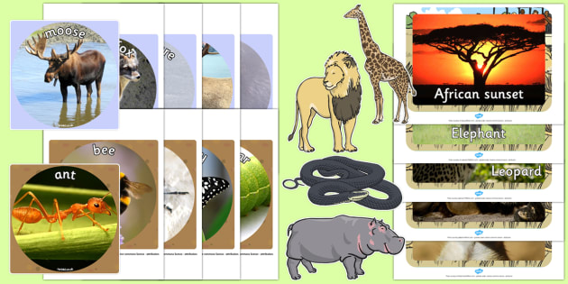 printable animal pictures animals display cut outs