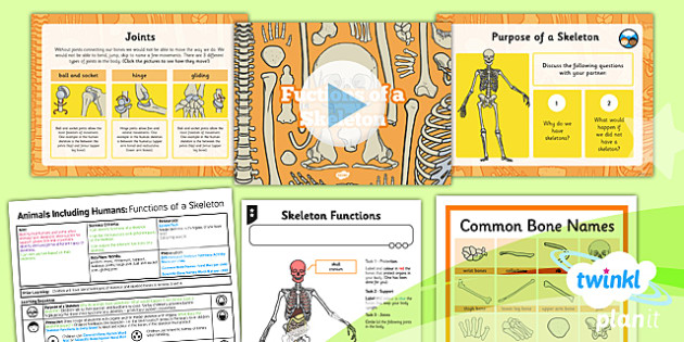 Science: Animals Including Humans: Functions of a Skeleton Year 3 Lesson Pack 5