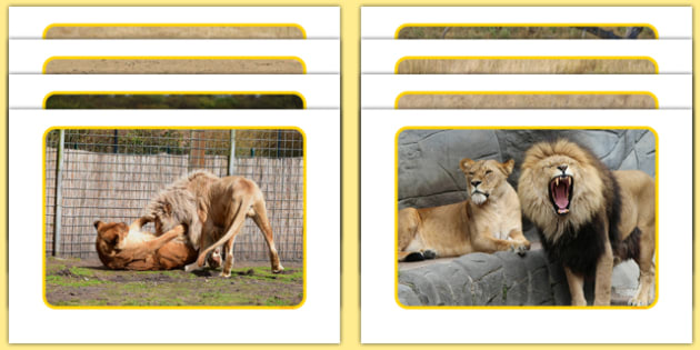 Lions Display Photos - Climb, eyfs, jungle, movement, dance, lions