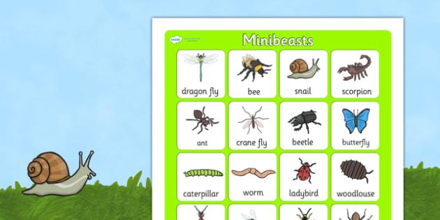 Minibeast Vocabulary Poster - minibeasts, vocab poster, display