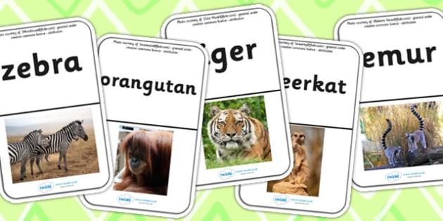 Animal Photo Flash Cards - animal, photo, flash cards, animals