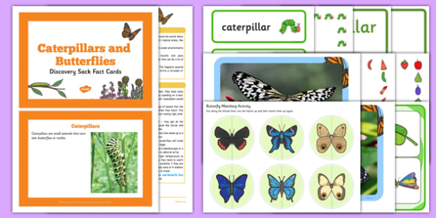 Caterpillars and Butterflies Discovery Sack - EYFS, Early Years, KS1, Key Stage 1, understanding the world, science, minibeasts, life cycles, Eric Carle