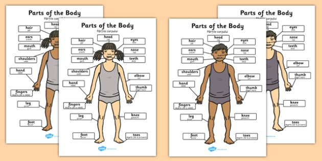 Parts of the Body A4 Romanian Translation - romanian, parts, body, a4, display, parts of the body
