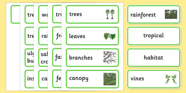 Australian Tropical Rainforest Habitat Word Cards - australia, Science, Year 1, Habitats, Australian Curriculum, Tropical, Rainforest, Living, Living Adventure, Good to Grow, Ready Set Grow, Life on Earth, Environment, Living Things, Animals, Plants,