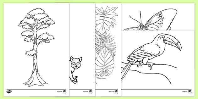 Rainforest Themed Coloring Sheets (teacher Made)