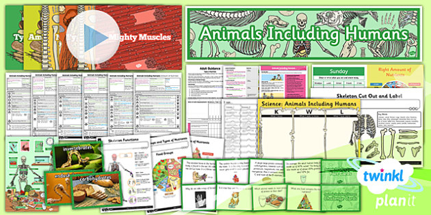 Science: Animals Including Humans Year 3 Unit Pack