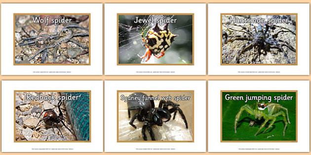 Australian Spiders Display Photos - australia, spiders, display photos, display, photos