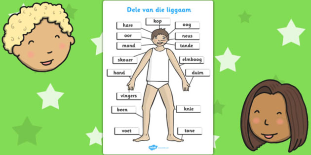 Liggaamsdele A4 - Oë, neus, mond, rug, (it depends on how you are using the word) , bors, tong, onsself, alles oor my, my lyf, sintuie , emosies, lyf, word grootte , liggaamsdele, dui aan die verskuilde liggaamsdele