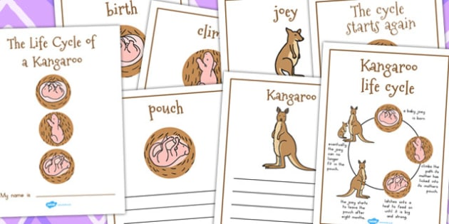 Kangaroo Life Cycle Workbook  Teacher Made