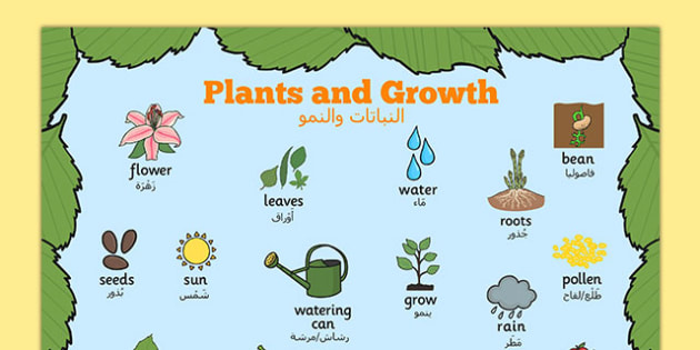 Plants and Growth Topic Word Mat Arabic Translation - EAL, translated, bilingual, grow, science, nature