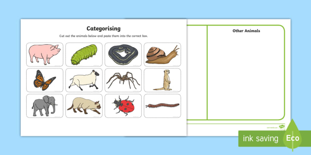 minibeast and other animals sorting activity animals insects sorting. Black Bedroom Furniture Sets. Home Design Ideas