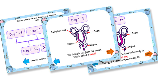 Menstrual Cycle Timeline PowerPoint - mentrual cycle, menstual cycle ks2, menstrual cycle powerpoint, what happens during the menstrual cycle, our bodies