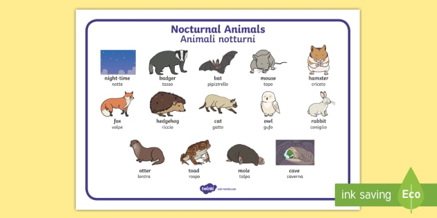 Italian English Animsld: * NEW * Nocturnal Animals Word Mat English/Italian