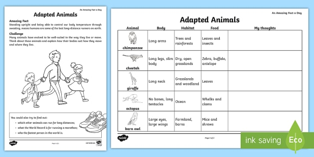 Adapted Animals Worksheet Worksheet July Amazing Fact