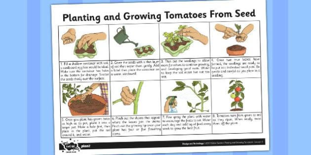Planting Tomato Seeds Fact Sheet - fact sheet, planting ...