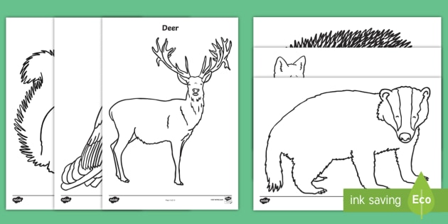 t t forest and woodland colouring pages ver 4