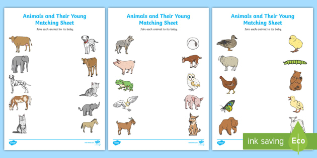 animals and their young matching worksheet activity sheets. Black Bedroom Furniture Sets. Home Design Ideas