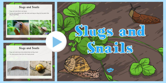 All About Slugs and Snails EYFS Information PowerPoint - Understanding the world, minibeasts