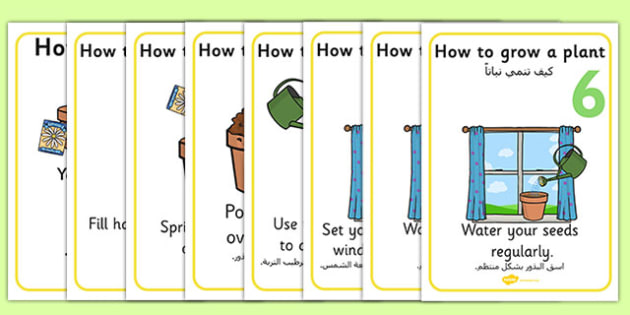 How to Grow a Plant Posters Arabic Translation - arabic, Plant, Growth, Topic, Foundation stage, Flower, knowledge and understanding of the world, investigation, living things, labelling, labelling plant