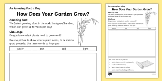 How Does Your Garden Grow? Activity Sheet, worksheet