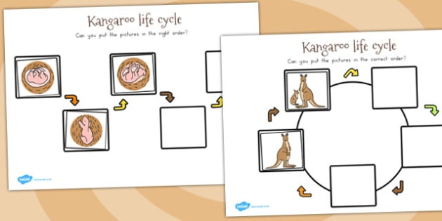 Kangaroo Life Cycle Worksheets  Teacher Made