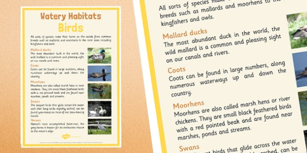 Canal Habitats Birds Display Poster - canal, habitats, canal habitats, display poster, display, poster, birds