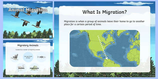 Animal Migration PowerPoint - Great Canadian Animals, Canada, animals, migrate, migration, winter, cold, goose, geese, fly