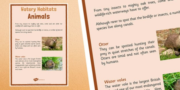 Canal Habitats Animals Display Poster - canal, habitats, canal habitats, display poster, display, poster, animals