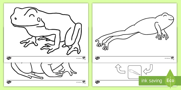 KS1 Frog Colouring Pages