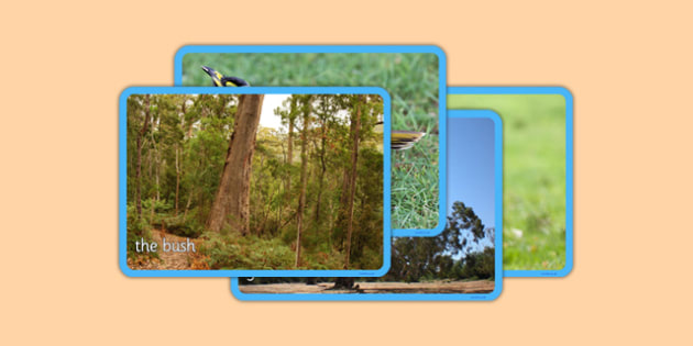 Bush Habitat Photo Display Pack - australia, Science, Year 1, Habitats, Australian Curriculum, Bush, Living, Living Adventure, Good to Grow, Ready Set Grow, Life on Earth, Environment, Living Things, Animals, Plants, Photos, Photographs, Display