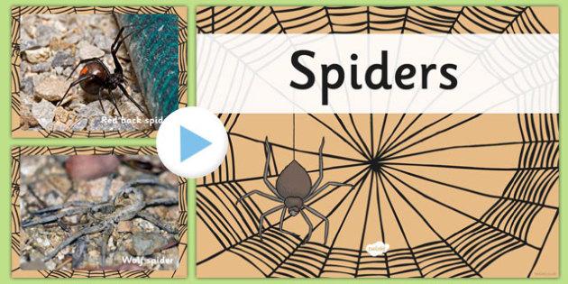 Australian Spiders PowerPoint - australia, spiders, powerpoint, animals