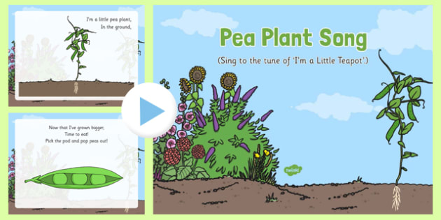 Pea Plant Song PowerPoint