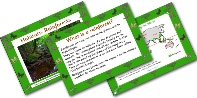 Rainforest Habitat PowerPoint - powerpoint, power point, interactive, powerpoint presentation, rainforest presentation, rainforest, rainforests, rainforests powerpoint, habitat, habitats, habitat presentation, habitat powerpoint, presentation, slide