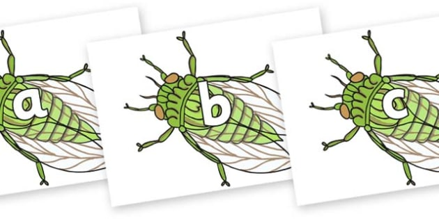Phase 2 Phonemes on Cicada - Phonemes, phoneme, Phase 2, Phase two, Foundation, Literacy, Letters and Sounds, DfES, display