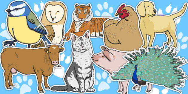 A4 Editable Animals - editable animals, animals, editable, editable A4 animals, A4 animals, display animals, large display animals, cow, dog, donkey, frog, giraffe, monkey, horse, cat, lion, pig, penguine, bird, panda, tiger, zebra