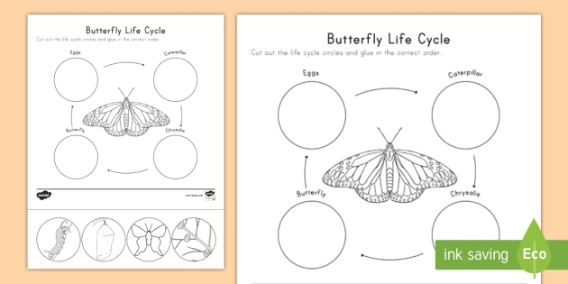 image regarding Butterfly Life Cycle Printable identify Butterfly Everyday living Cycle Slice and Paste Worksheet / Worksheet