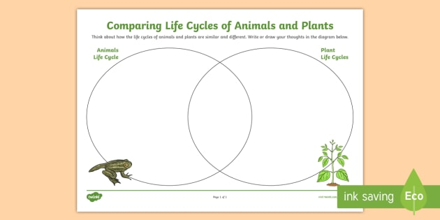 Comparing Plant And Animals Life Cycles Venn Diagram Worksheet