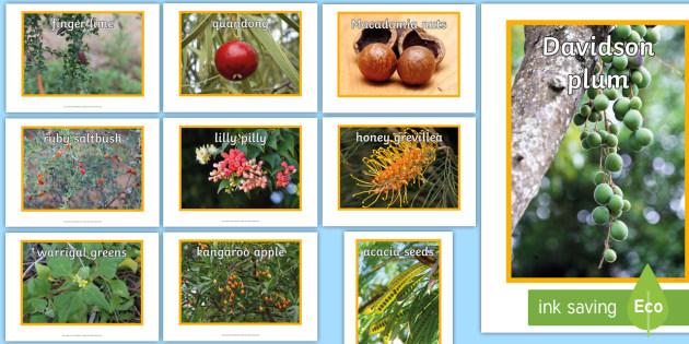 Bush Food Display Photos-bush food, bush tucker, traditional aboriginal lifestyle, indigenous food, bush tucker, Australian plants, Australia