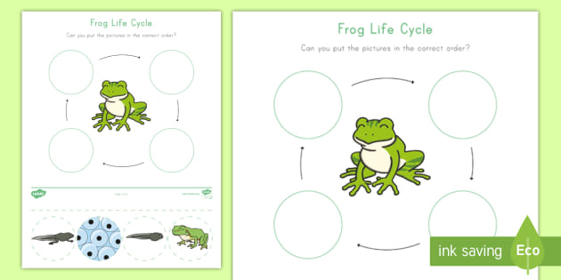 photo relating to Frog Life Cycle Printable identify Frog Daily life Cycle Game - frog, lifetime, cycle, tadpole