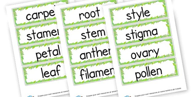 Parts of a flower labels plants growth primary resources ccuart Images
