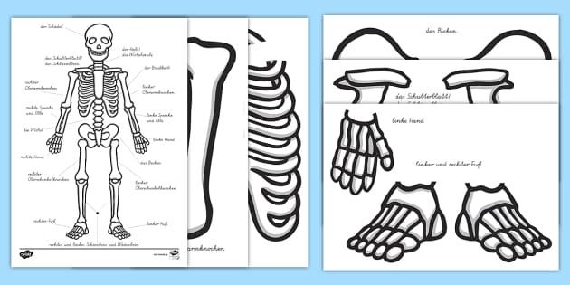 New Skelett Zum Ausschneiden Korperteile Korper Knochen Schadel
