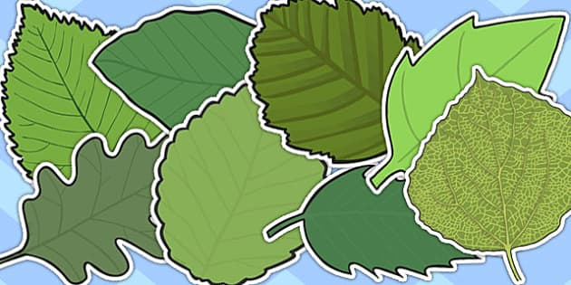 Variety Green Leaves A4 Cut Outs - green, leaves, cut, role-play