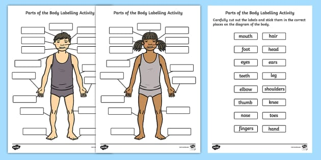 Human Body Parts Labelling Activity - Body Parts Worksheet