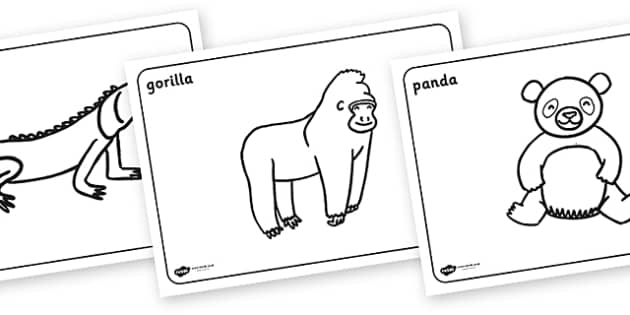 rainforest animals colouring pages