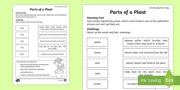 parts of a plant worksheet worksheet amazing fact of the day march. Black Bedroom Furniture Sets. Home Design Ideas