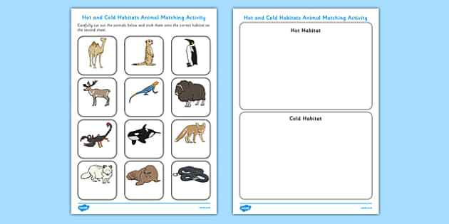 Hot And Cold Habitats Animal Sorting Worksheet Hot Cold