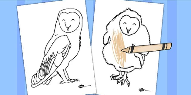 Owl Pictures To Colour In Primary Resources (teacher Made)