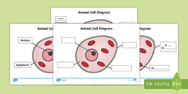 Animal Cell Labelling Activity Basic Animal Cell Diagram